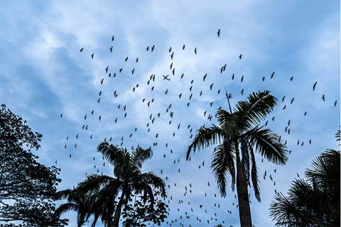 Birds and palm trees