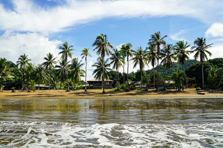 Palm Trees and Beach in Chocó