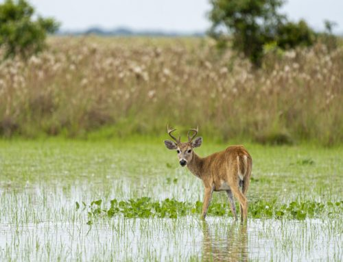 Colombian Wildlife and Nature