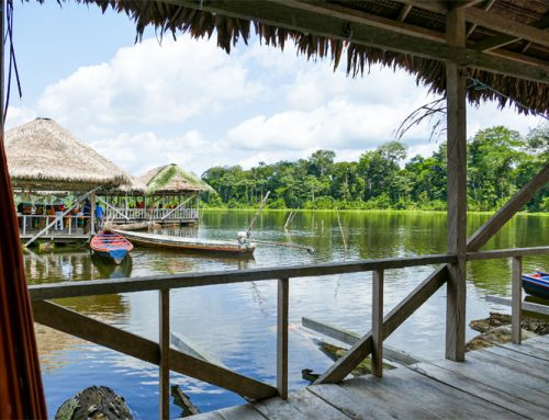 Colombian Amazon Jungle