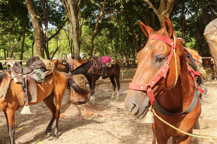 Horse transportation in Tayrona Park Colomboa
